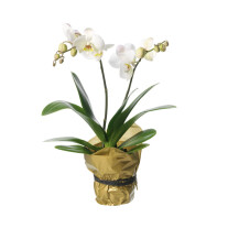 Single plant Orchid